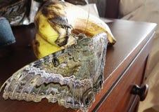 Banane dominicaine d'eatinng de papillon photographie stock libre de droits