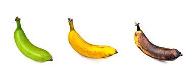 Banane – drei Stadien Reife Lizenzfreie Stockbilder