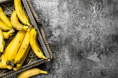 Banane fresche in una vecchia scatola Immagine Stock