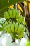 Banane II Stockbild