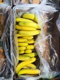 Banane mature fresche in scatola sul mercato Immagini Stock