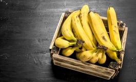 Banane mature in una vecchia scatola Immagini Stock