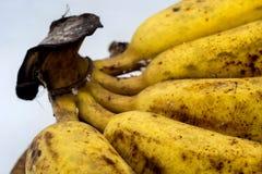 Banane mit Form oder Pilze auf dem weißen Hintergrund Stockfotos