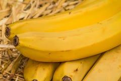 """Banane organiche, †latino """"musa Frutti della banana sul fondo naturale della paglia Fotografia Stock"""
