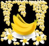 Banane, plumeria, frangipani, fruit de raisin Photos stock
