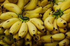 Banane su una priorità bassa bianca dello studio Fotografie Stock