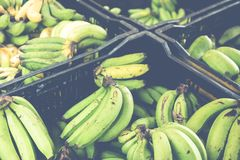 Banane sul servizio mercato del ` s dell'agricoltore Fotografia Stock