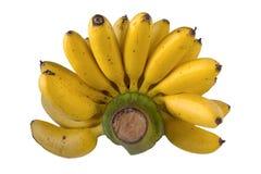 Banane tailandesi sui precedenti bianchi immagine stock libera da diritti