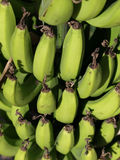 Banane verdi Fotografia Stock Libera da Diritti