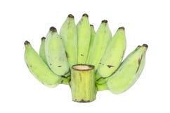 Banane verdi crude isolate su fondo bianco Fotografia Stock