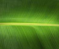Banane verlässt grünen Hintergrund Stockbild