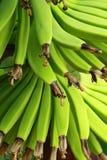 Banane verte Images stock