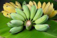 Banane verte sur la feuille de banane Photographie stock