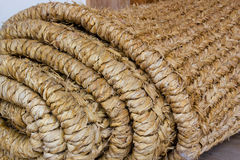 Bananeira imagens de stock
