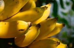 Bananen är en frukt Det är inte rimlig att ha mycket energi Men tro det, eller inte, är bananen ett reserv- lager för maktkälla i Arkivfoton