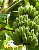 Bananen. Lizenzfreies Stockbild