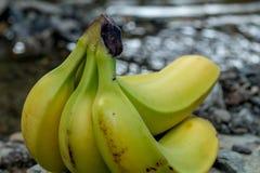 Bananen auf einem Felsen mit Wasser im Hintergrund Lizenzfreies Stockfoto