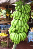 Bananen-Bündel Stockbild
