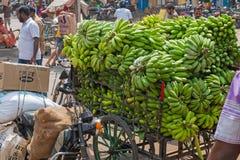 Bananen bei dem Transport zum Stadtmarkt in Madurai, Tamil Nadu Lizenzfreies Stockbild
