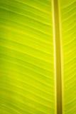 Bananen-Blatt Stockfotos
