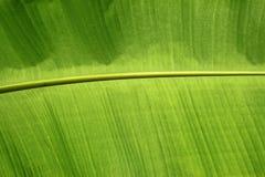 Bananen-Blatt Lizenzfreie Stockbilder