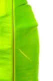 Bananen-Blatt. Stockbilder