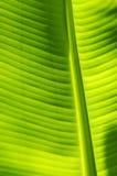 Bananen-Blatt Stockfoto