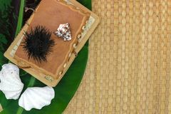 Bananen-Blatt, alte Reise-Bücher, Muscheln und Seeigel auf Brown Straw Mat Background mit freiem Raum Lizenzfreie Stockbilder