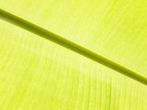 Bananen-Blatt-Detail Stockbilder