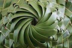 Bananen-Blatt-Hut Stockbilder