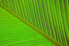 Bananen lämnar makro Arkivfoton