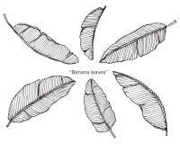 Bananen lämnar teckningen och skissar Fotografering för Bildbyråer