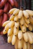 Bananen oder Bananen Lizenzfreies Stockbild