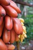 Bananen oder Bananen Stockfotografie