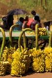 bananen shoppar Arkivfoton