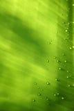 bananen tappar leafen Arkivbilder