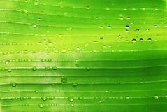 bananen tappar leafen Royaltyfria Foton