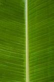 bananen tappar leafvatten Arkivbilder