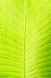 bananen tappar leafvatten abstrakt bakgrund royaltyfri foto