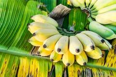 Bananenbündel reif stockfotografie