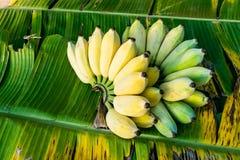 Bananenbündel reif stockfotos