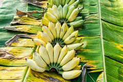 Bananenbündel reif lizenzfreie stockfotos