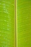 Bananenblätter Lizenzfreies Stockbild