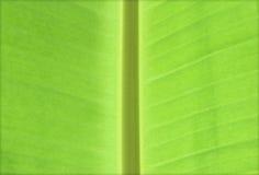 Bananenblätter Lizenzfreie Stockfotos