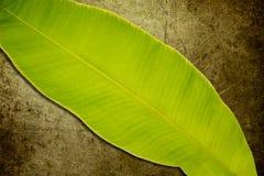Bananenblätter Stockbild