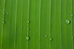 Bananenblätter Lizenzfreies Stockfoto
