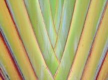 Bananenblätter kaskadiert wie ein Schlaghintergrund Stockbilder