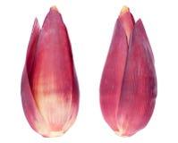 Bananenblüten Stockfotos