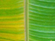 Bananenblatt Lizenzfreies Stockfoto