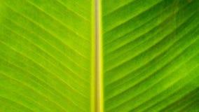 Bananenblatt-Beschaffenheitshintergrund Lizenzfreie Stockfotos